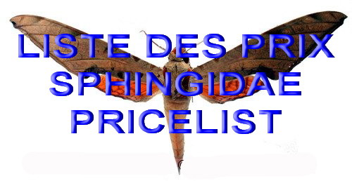 Sphingidae List and price on inquiry<br>