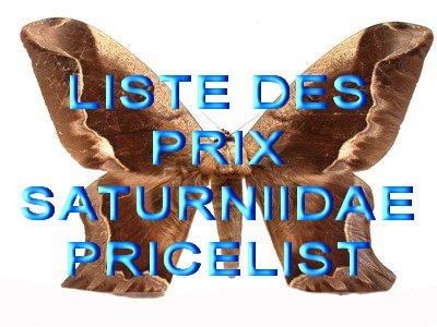 Saturniidae List and price other species on inquiry<br>